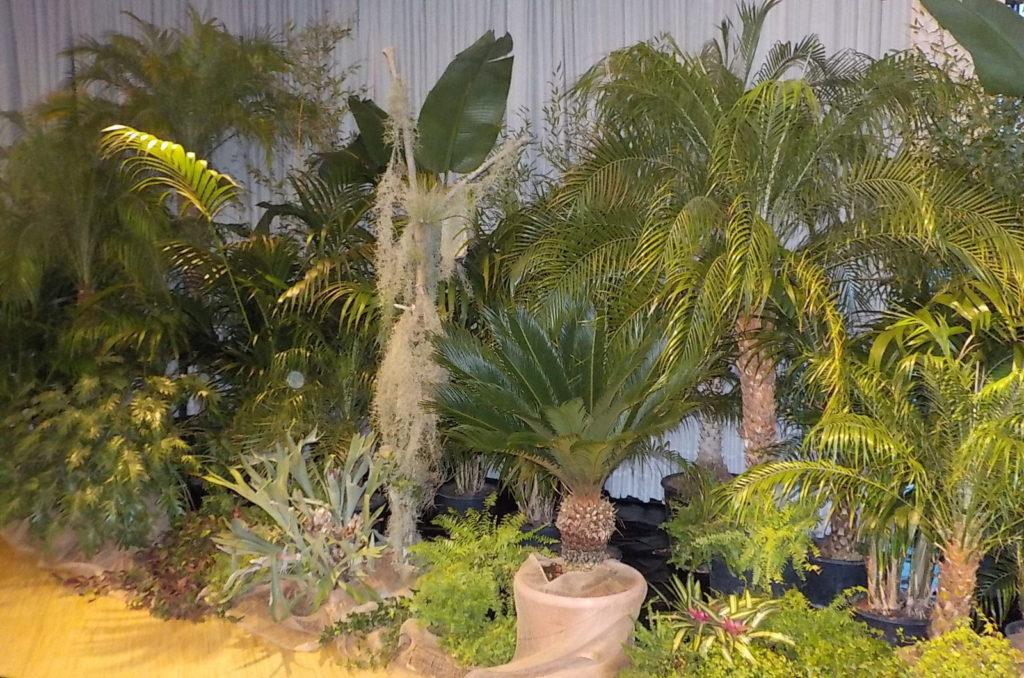 exotische-pflanzen-verleihen-dschungelfeeling
