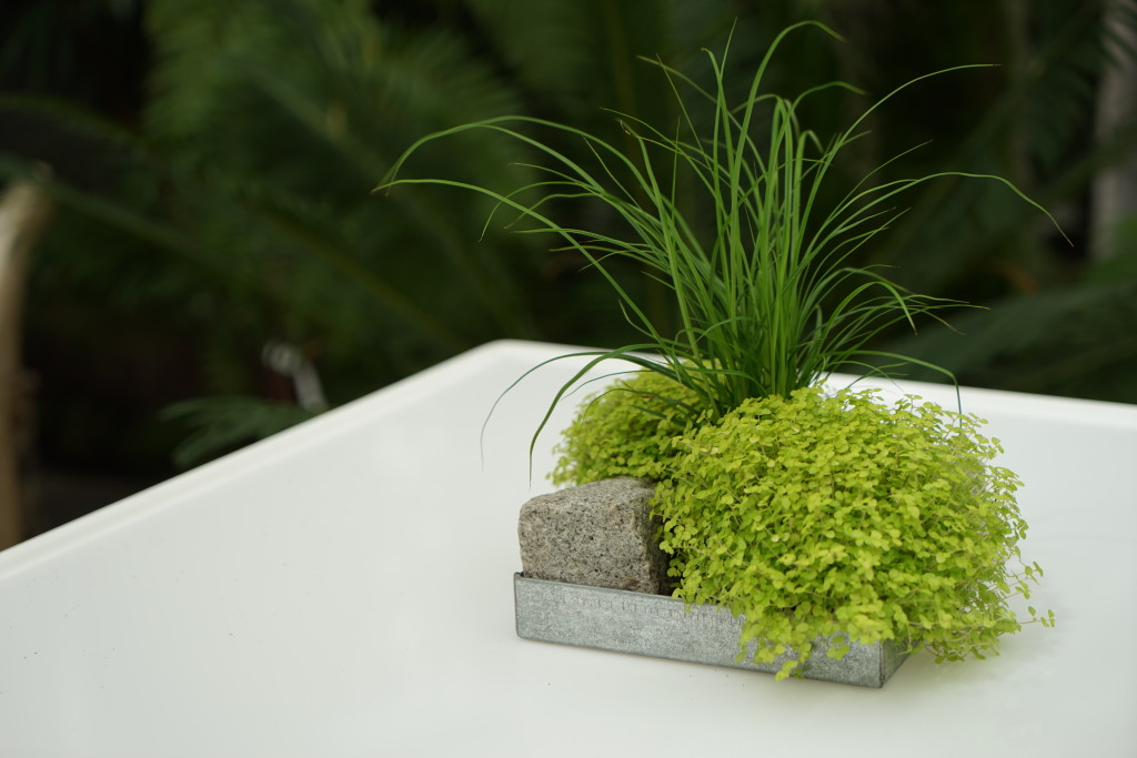 mietpflanze-laubbaum