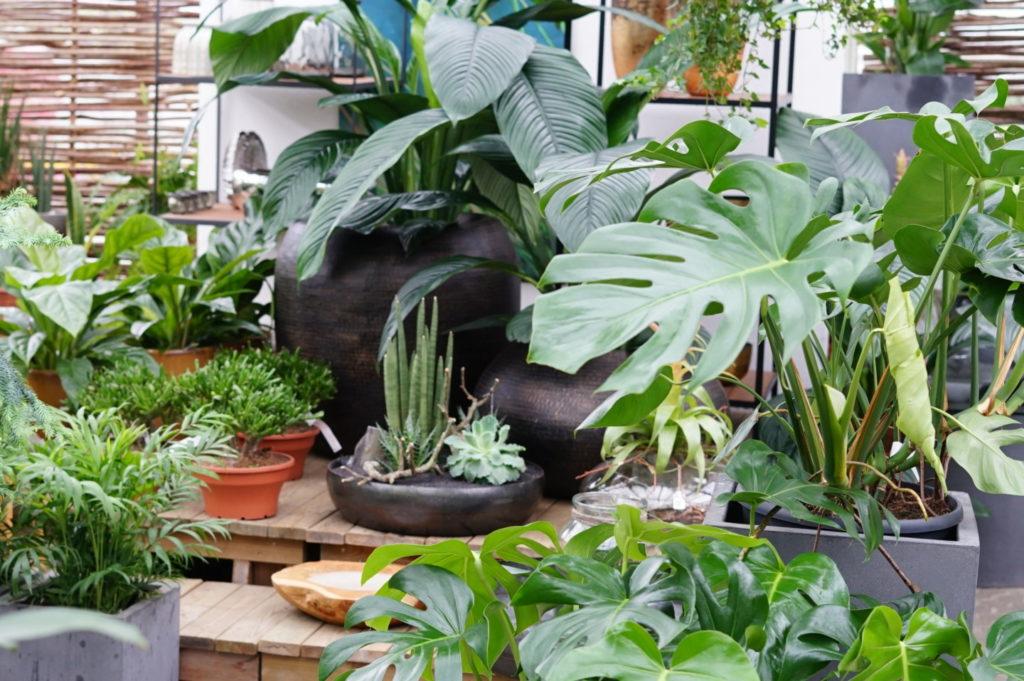 floristik-pflanzen-stuttgart
