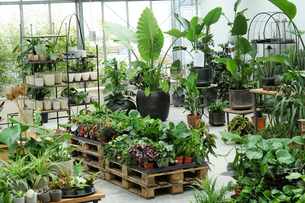 Zimmerpflanzen Mehrwert